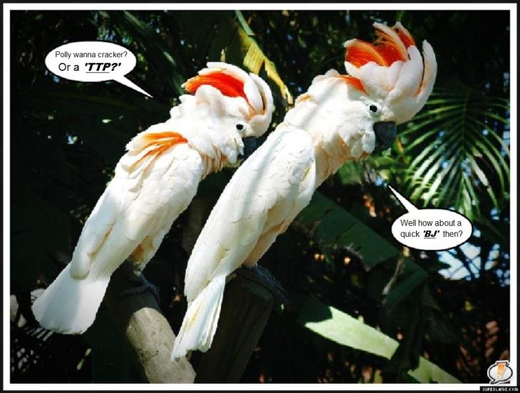 Parrot Cocky's Polly wanna TTP BJ