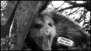 Possum Patriot Act 600