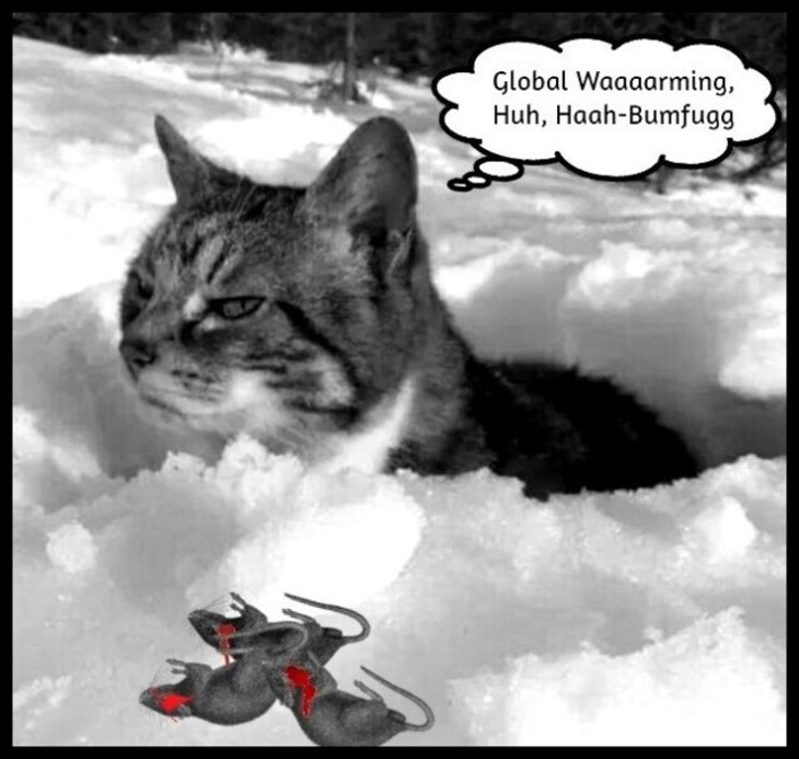 Global warming cat snow BW HAH-BUMFUGG _ Bloody mice